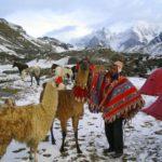 llamas on ausangate trek